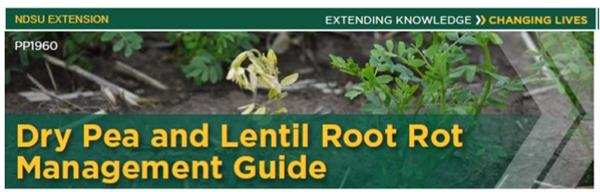 Root Rot guide